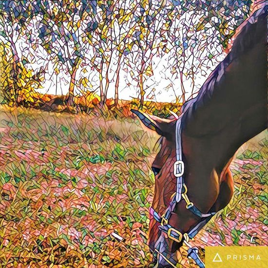 Mosaic Prisma_Filter Grass Tree Landscape Field Close-up Horse Photography  Horse Outdoors Tranquil Scene Scenics Nature Tranquility