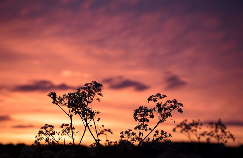 Silhouette Plants Against Dramatic Sky During Sunset