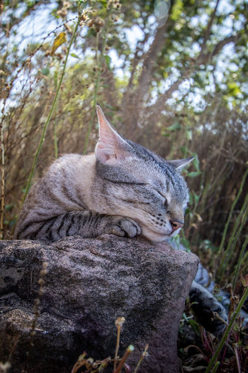 Cat relaxing on rock