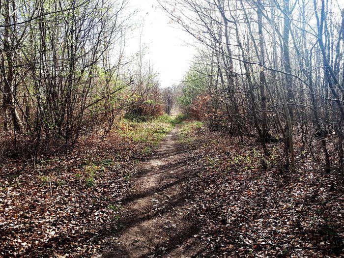 Nature Compiegne  Chemin Chemin Forestier