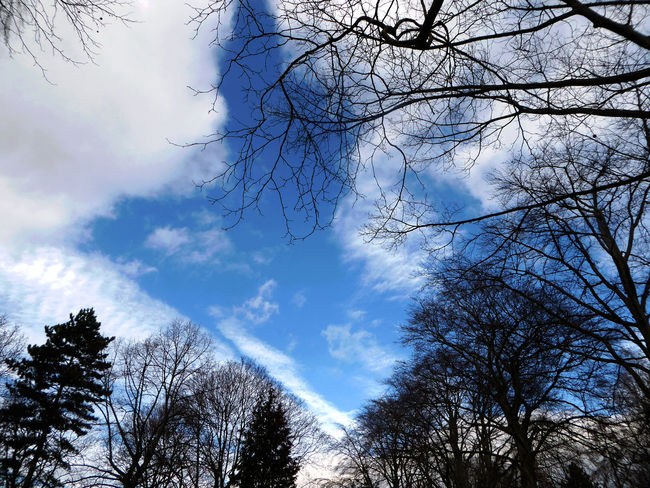 Bare Tree Beauty In Nature Blue Sky Whereever I Go😁 Branch Cloud - Sky For My Friends 😍😘🎁 Nature Sky Tranquility