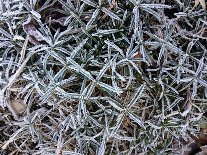 Pattern Textured  Leaves Plant Cold Temperature Winter Backgrounds Full Frame Frozen Ice Crystal High Angle View Close-up Frost Weather Condition