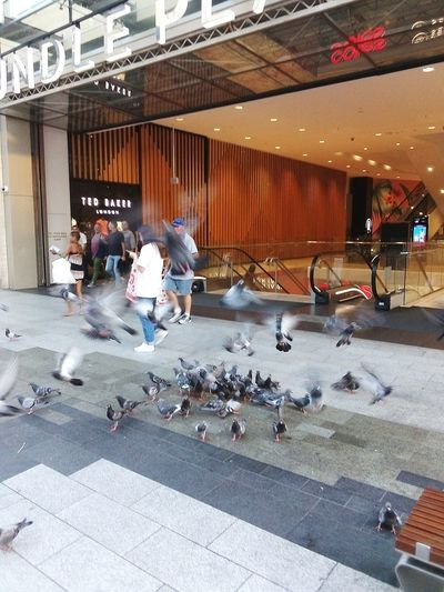 People Rundle Mall Rundlemall Built Structure Building Building Exterior Adelaide Adelaide Adelaide S.A. Adelaide, South Australia Australia Pigeon Bird  Pigeons Everywhere Pigeons In Flight Birds Feeding Flying Pigeons Birds Streetphotography Street Photography Taking Photos Street Bird Architecture Pigeon Flock Of Birds Flapping Spread Wings Street Scene