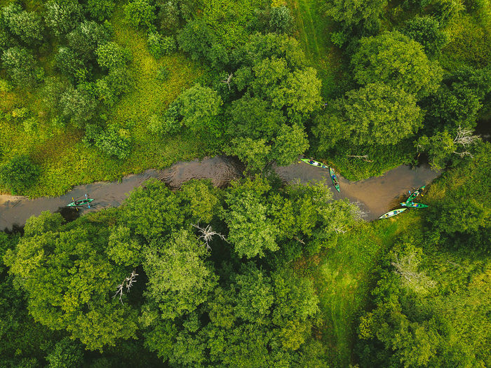 Canoes DJI Mavic Pro Drone  Aerial Aerial View Beauty In Nature Canoes Day Environment Foliage Forest Green Color Growth High Angle View Land Leisure Activity Lush Foliage Mavic Mavic Pro Nature Outdoors Plant Rainforest Scenics - Nature Sport Tranquil Scene Tranquility Tree Water Winding River