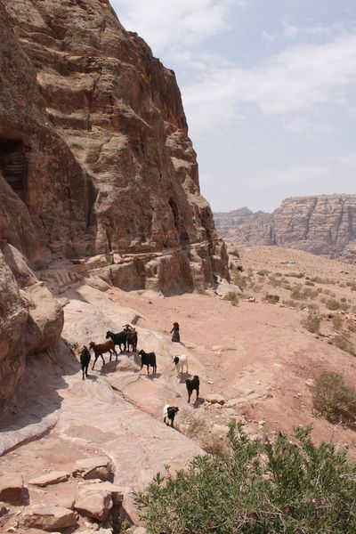 Ancient Ancient History Archaeology Jordan Kings Highway Petra Petra, Jordan Raqmu World Heritage Site By UNESCO Ancient Architecture Ancient City Ancient Civilization Ancient Monument Ancient Ruins Archaeological Archaeological Sites Beauty In Nature Camel Deset Mountain Nabatean Nature Rock Formation Rose City Sandstone