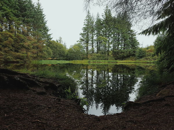 Castlewellan Forest Mountain Water Pool Reflection Reflect Peace Nature Trees Castlewellan Forest Park Newcastle Countydown County Down Northern Ireland Northernireland Ireland Beautiful