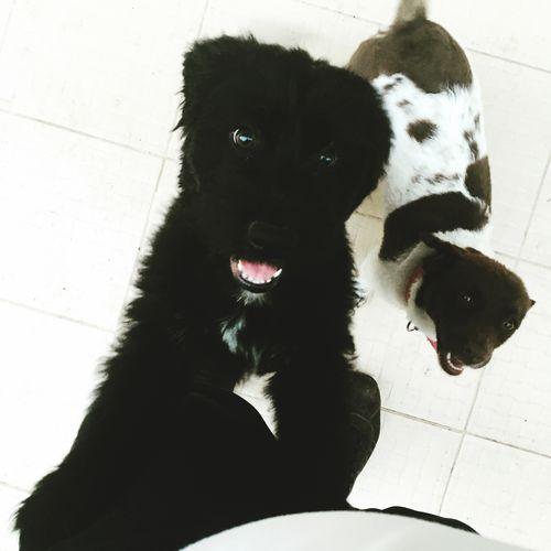 Karşılama komitesi Mammal Pets Domestic Domestic Animals One Animal Canine Vertebrate