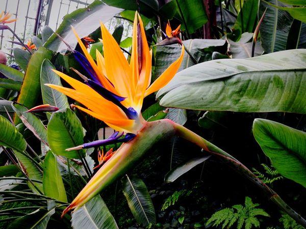 Serres De Laeken (Brussels). Flowers Flowerporn