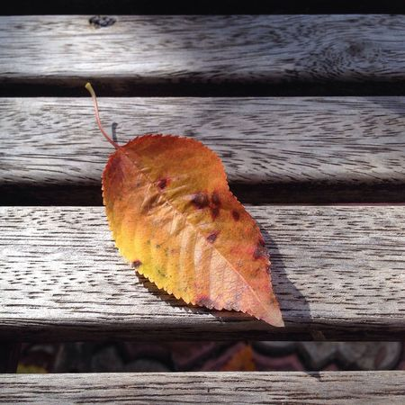 Leaf Autumn Change Nature Wood - Material Outdoors Day Water No People Beauty In Nature Close-up Animal Themes