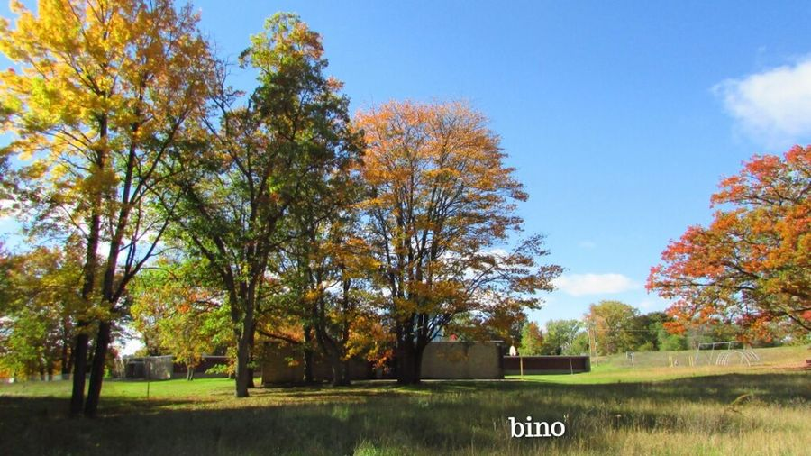 Family Walks Fall Shooting Rural Scene Trees And Colors Clear Skies Cooling Down Diggins Trail Cadillac Michigan