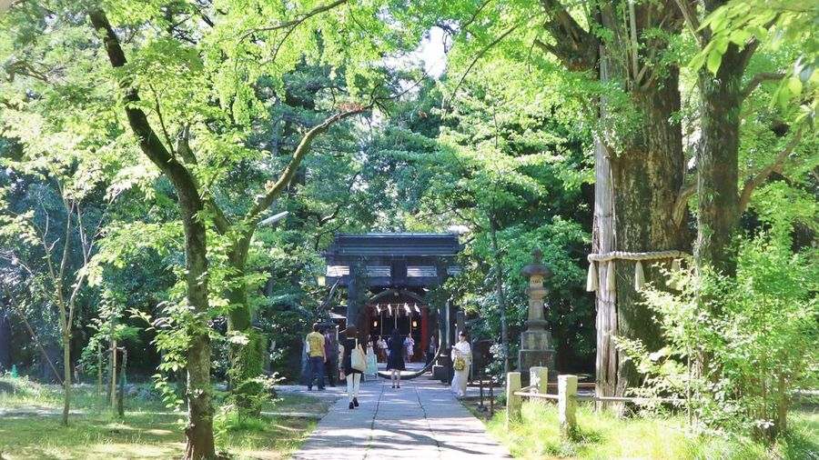Chinowakuguri Chinowa Shrines & Temples Shrine Of Japan Shrine Plant Tree Architecture Growth Built Structure Green Color