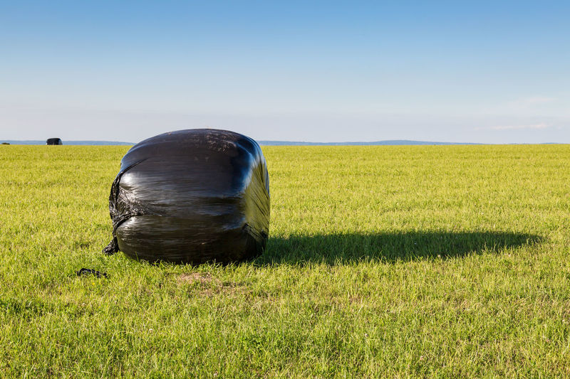 Hay Bale with Protective Weatherproof Plastic Agriculture Beauty In Nature Cereal Plant Clear Sky Crop  Day Farm Field Grass Growth Hay Bale Landscape Nature No People Outdoors Plastic Rural Scene Scenics Sky Sunlight Weatherproof