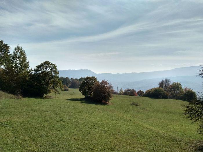 Tree Field Sky Grass Landscape Cloud - Sky Grass Area