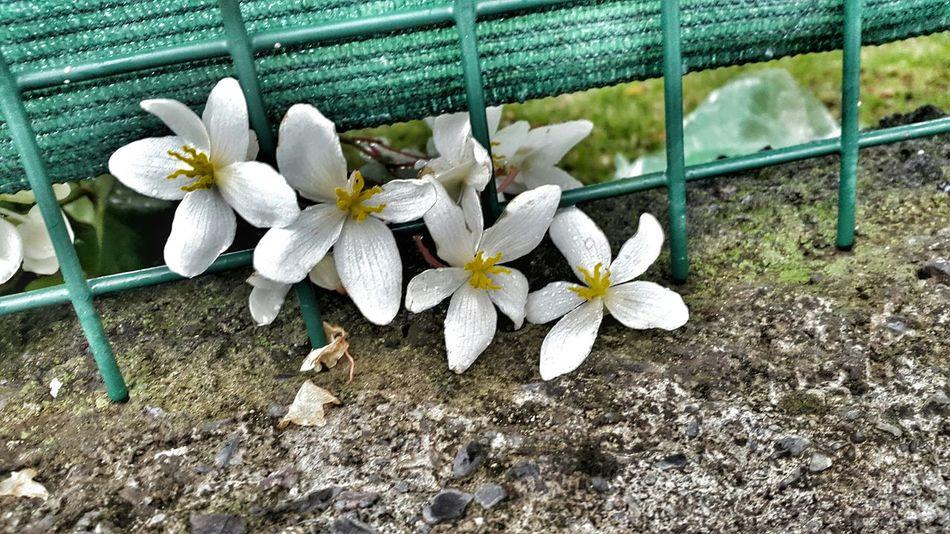 Reunion Island Ile De La Reunion, Une Beauté, Un Paradis, Mon Ile <3 Magnifique Ile De La Reunion Opent Edit Like Beautiful Nature Flowers Love <3 Eyem Flowers Eyem Nature Jolie❤ jolie ou pa un max de jaime please likké😃🙈🙈
