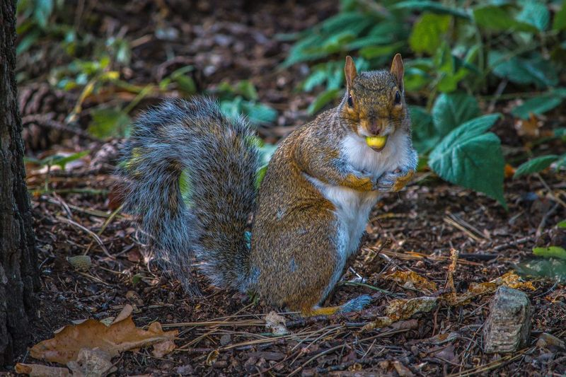 Squirrel sitting on field