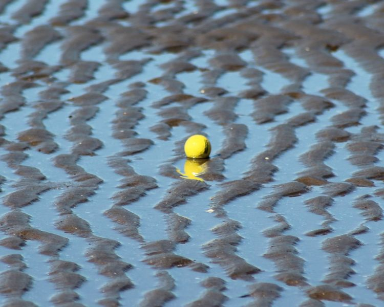 Beauty In Nature Day Natural Pattern Nature No People Outdoors Tranquility Yellow Golf Golf ⛳ Golfball Ball Paint The Town Yellow