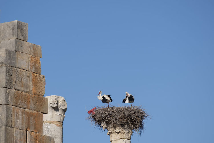 Low angle view of storks perching on nest against sky