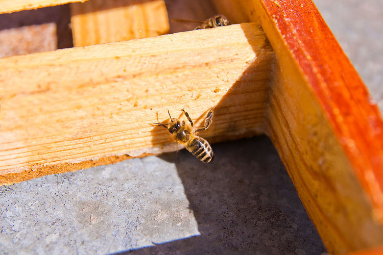 Animal Themes Animal Invertebrate Insect Animal Wildlife Animals In The Wild One Animal Bee APIculture Close-up Honey Bee Beehive No People Nature Wood - Material Day High Angle View Beauty In Nature Outdoors