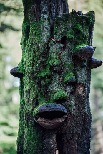 Green Green Green!  Green Color Tree Tree Trunk Close-up Faces Focus On Foreground Green Color Land Moss Old Plant Rough Textured  Tree Tree Trunk Tree_collection  Trunk Trunk Detail Trunk Tree Wood - Material Woods Woodscapes