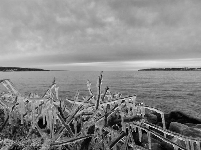 Ice melting covered on twigs at edge of sea