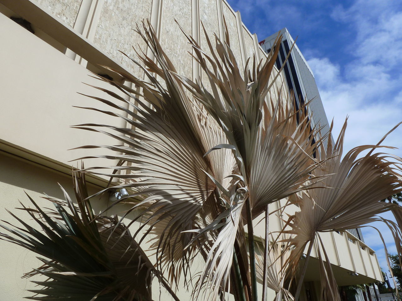 low angle view, sky, palm tree, day, no people, outdoors, nature, tree, growth, plant, close-up, beauty in nature