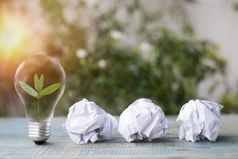 Close-up Crumpled Crumpled Paper Ball Day Flower Flowering Plant Focus On Foreground Fragility Freshness Group Of Objects Growth Nature No People Outdoors Paper Plant Selective Focus Still Life Table Vulnerability  White Color