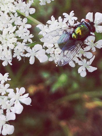 EyeEm Nature Lover Fly
