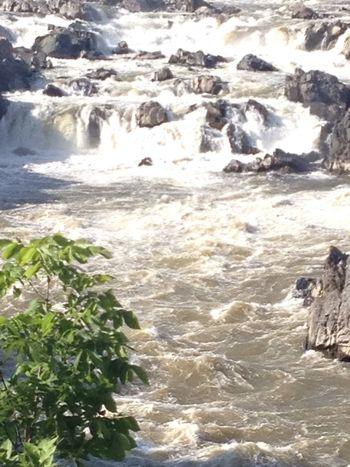 Rapids