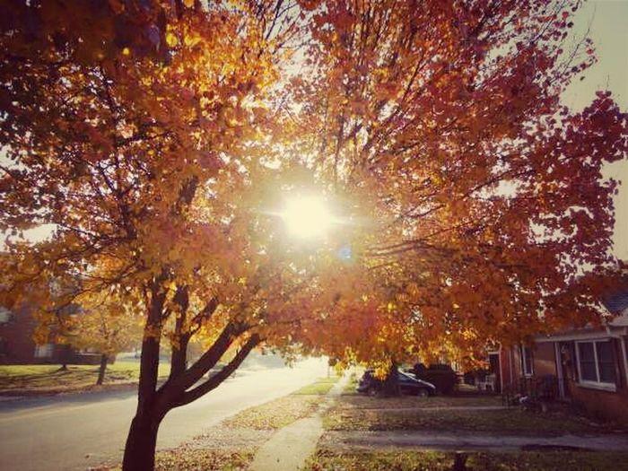 Nature Autumn Autumn Leaves Sunlight Lens Flare Naturehippys Best Of Fall