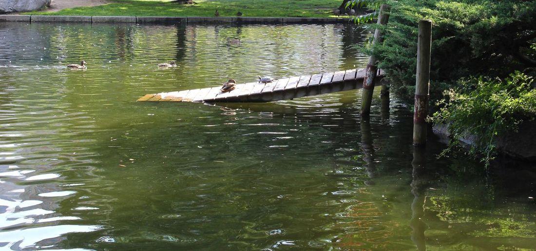 Duck relaxing