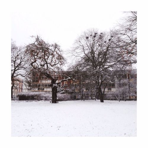 Snow Snowing Snow ❄ Snow Day Christmas Trees Tree Streetphotography Tree Nest Malmö
