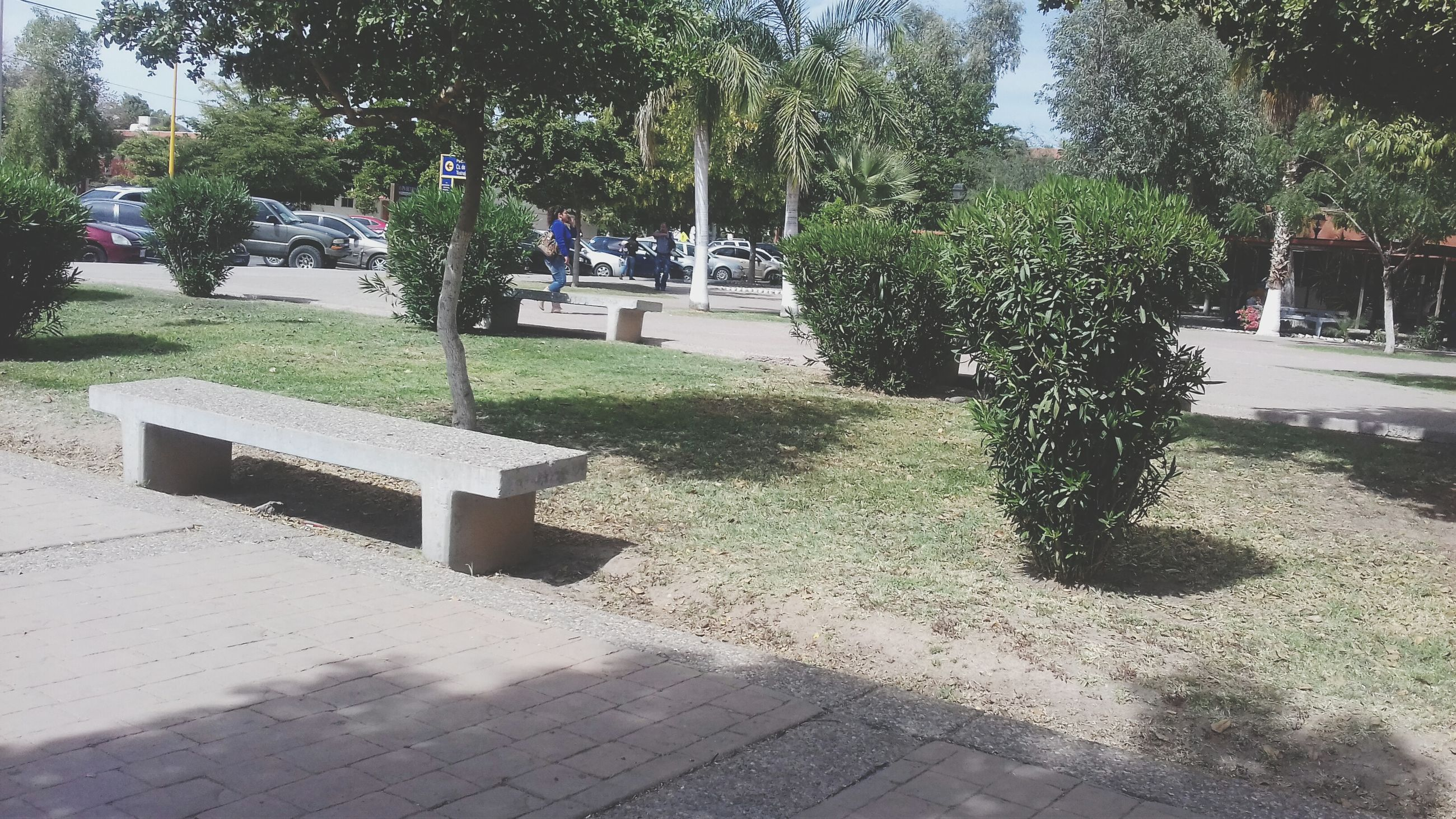 tree, building exterior, growth, park - man made space, shadow, sunlight, built structure, architecture, footpath, tree trunk, empty, bench, street, plant, day, incidental people, outdoors, nature, green color, lawn