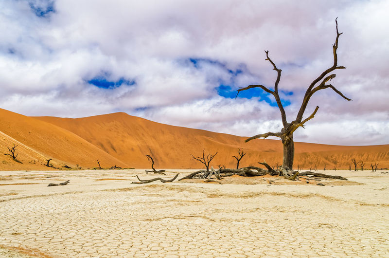 Dead camelthorn tree in Deadvlei, Namibia Landscapes Sand Dune Salt Pans Sand Sossusvlei Namibia Acacia Deadvlei Dead Tree Travel Clouds And Sky Cloudscape Orange Color Kalahari Nature_collection Nature Photography Beauty In Nature Nature's Diversities Feel The Journey Ice Age Neighborhood Map