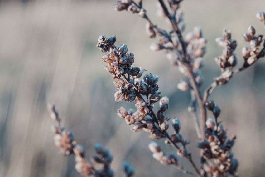 Nature Growth Beauty In Nature Flower Fragility Freshness Close-up Plant No People Outdoors Day Grassland Cold Temperature Showcase: December Wintertime Fuji-xe2s Tenebrio.photos Zeiss60mm Focus On Foreground Macro