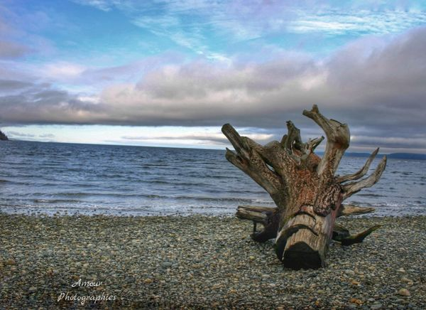 Beach Break Collection . Pt.4 Enjoying Life Beachscape Photography Beachscape Outdoor Life Landscape_photography Landscape Drift Wood  Beach Explore Nature Weathered Wood Beach Photography Beautiful Vancouver Island British Columbia Canada Exploring Nature Simple Photography Nature Explore More Weathered Log Explore Canada