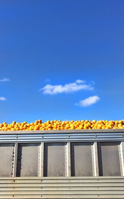 Grapefruit Transport Truck Sky No People Day Metal Outdoors Colors Metal Mesh Blue, Yellow, And Silver