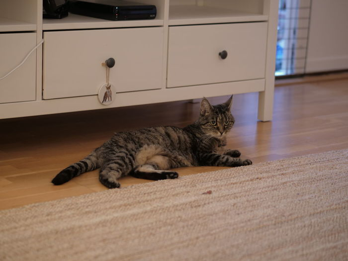 Cat lying on floor at home