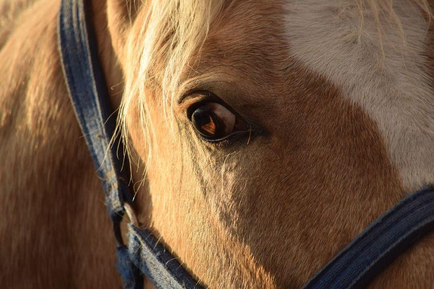 One Animal Animal Themes Close-up Animal Head  Animal Eye Brown Extreme Close Up Focus On Foreground Horse Eye