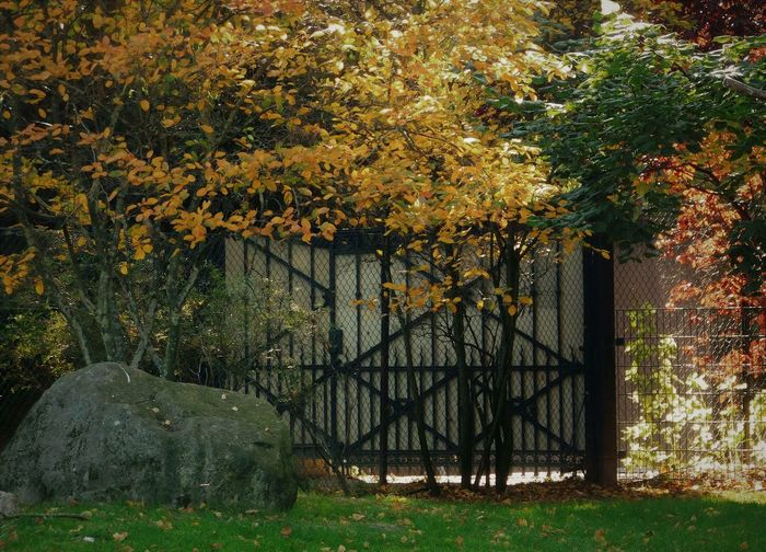 Trees and plants in yard during autumn