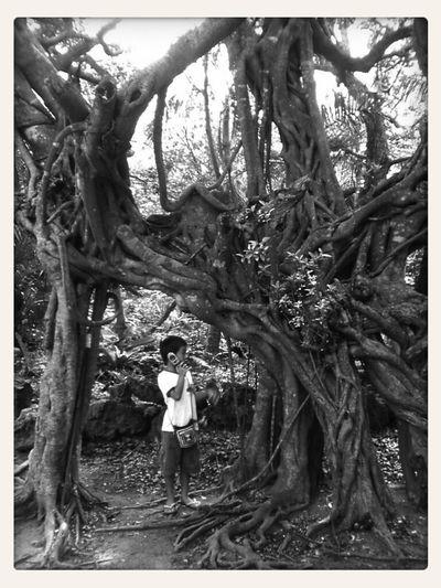 Blackandwhite Tree Frame It!
