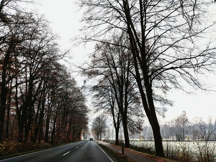 Empty road along bare trees