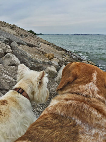 Sometimes we sits and thinks, and sometimes we just sits. Lake Ontario Port Union Village Waterfront Trail Dog Lover Mixed Breed Beagle Bull Dog Westie IPhoneography
