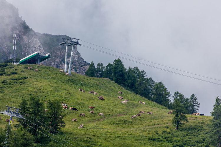 Calm Clouds Cows Landscape Liechtenstein Mountainous Mountains Ski Lift Tranquility Village