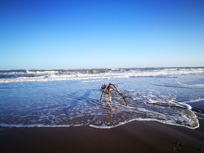 Sea Water Nature Blue Horizon Over Water Clear Sky Sky Beauty In Nature No People Scenics Outdoors Beach Wooden Abandoned Object Tree Tree Trunk Branch Finding New Frontiers