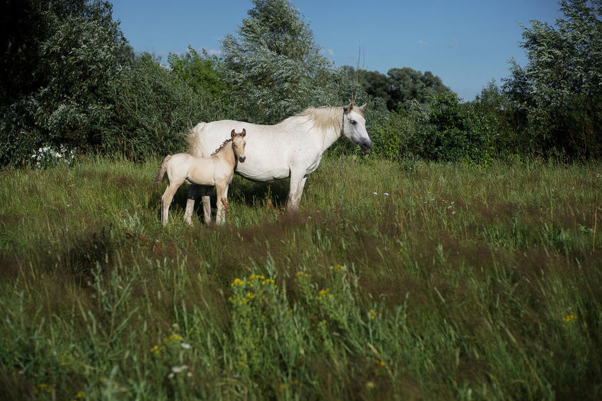 Belarus Belarus Nature Horses Animal Themes Beauty In Nature Domestic Animals Grass Green Color Horse Landscape Livestock Mammal Nature Outdoors Standing Village Village Life