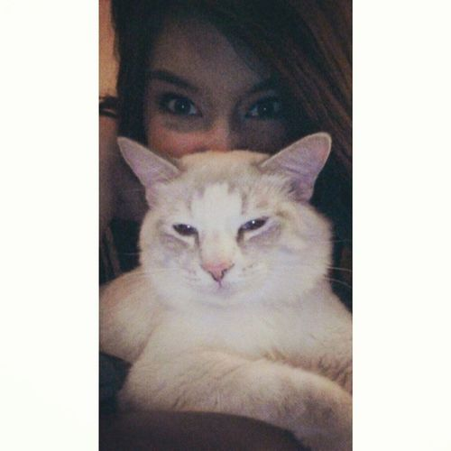 Sorry but my cat is cool as fuh Coolerthanyours Partnerimcrime Sorrynotsorry