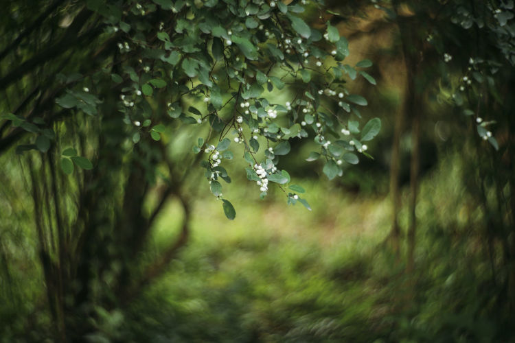 bokeh flower Green Color Vietnam Bokeh Bokeh Photography Flower Collection Heritage Trees And Nature Vietnam Trip