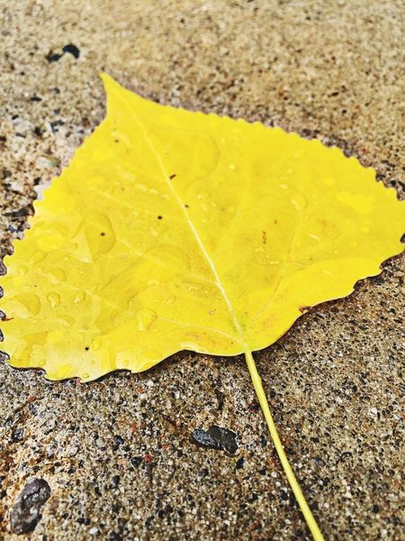 Yellow Leaf On Concrete Outdoors Outside Rain Rain Drops After The Rain Still Life Photo IPhoneography Iphonephotography Outside My Window Outdoor Photography Nature Photography Yellow Color Leafs Leaf 🍂 Leaf Leafporn Nature On Your Doorstep Water Drops Nature_collection Yellow Leaves Fall Colors After Rain Wet Leaf Wet Day