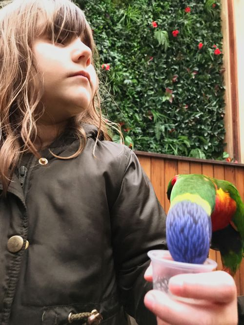 Feeding Animals Childhood Parakeet EyeEm Selects One Person Real People Day Lifestyles Indoors  Close-up