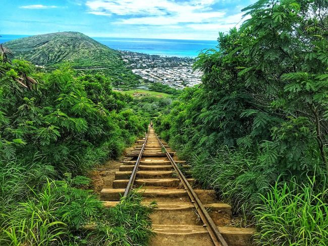 Koko Trail Photo Photography Hawaii Oahu Plant Green Color Nature Growth No People Day The Way Forward Tree Sky Direction Rail Transportation Beauty In Nature Outdoors Track Railroad Track Cloud - Sky Transportation Land Tranquility Diminishing Perspective